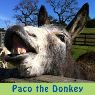 Paco the Donkey