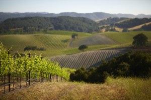 Niner Wine scenic