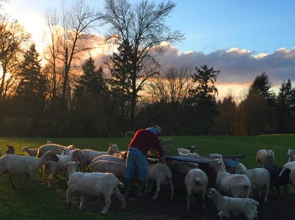 farmer-and-sheep